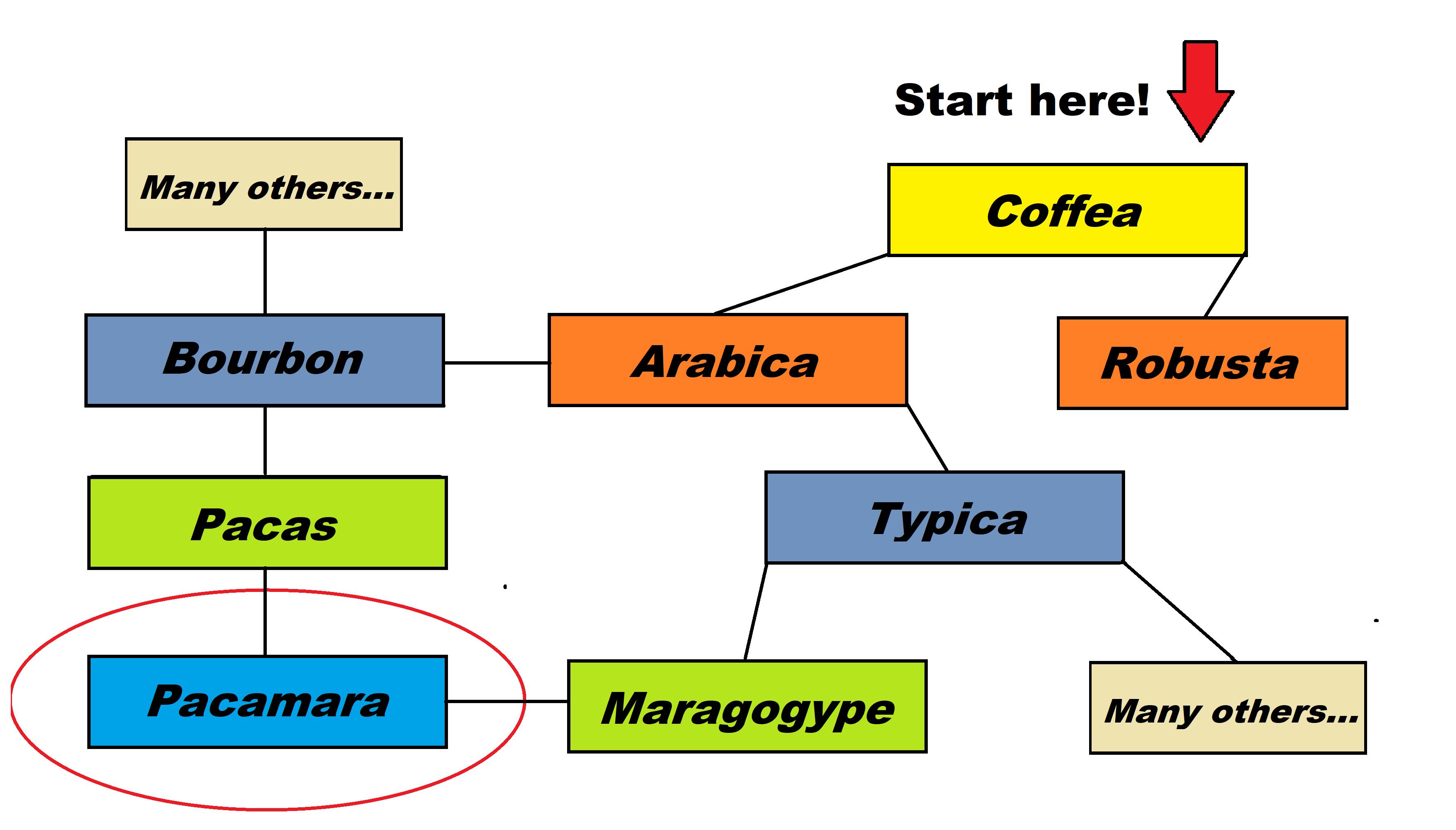 Pacamara Coffee Varietal Map