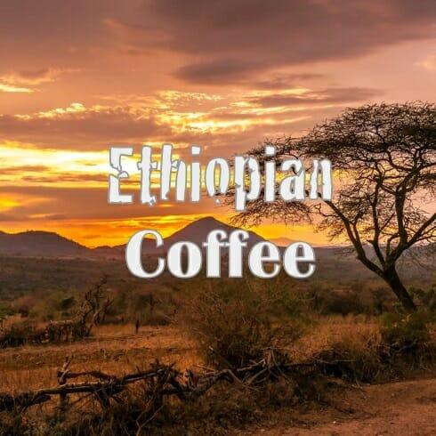 Volcanica Ethiopian Yirgacheffe Coffee